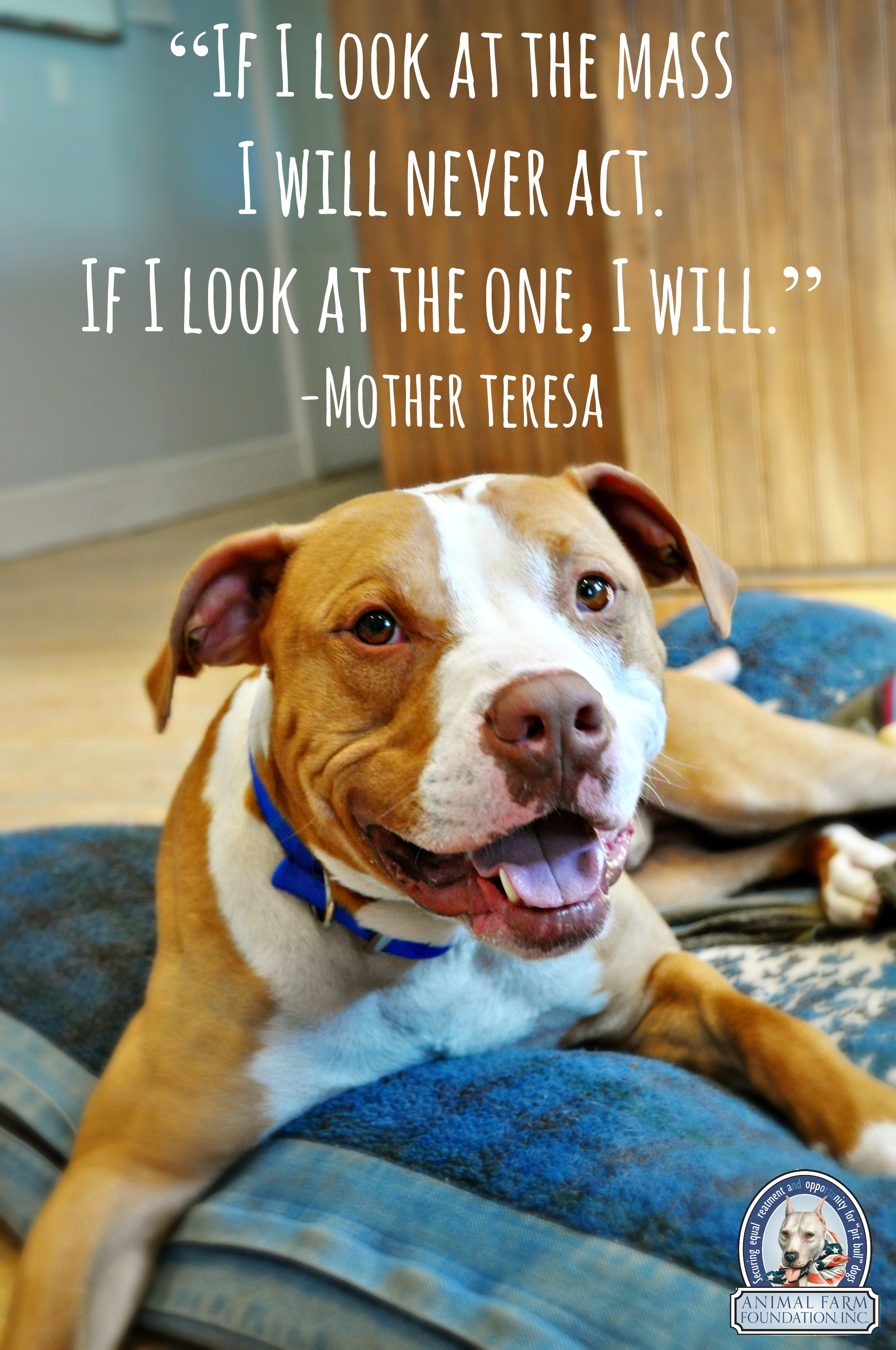 Pitbull Dog Quotes How To Stop My Dog From Eating Her Poop Pitbull Dog Quotes How