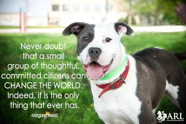 "Ambassador Dog Programs: Evolving ""Pit Bull"" Dog Adoptions"