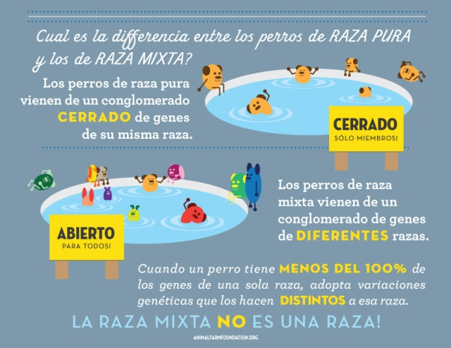 AFF_infographic_SPANISH_4