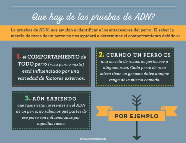 AFF_infographic_SPANISH_7