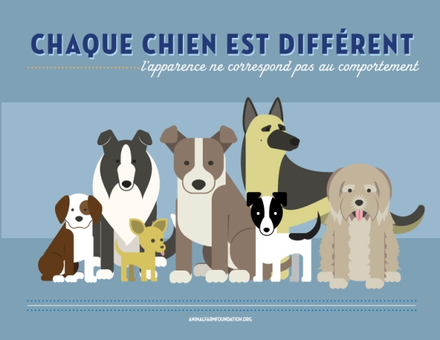 All Dogs Are Individuals [INFOGRAPHIC]: FrenchTranslation