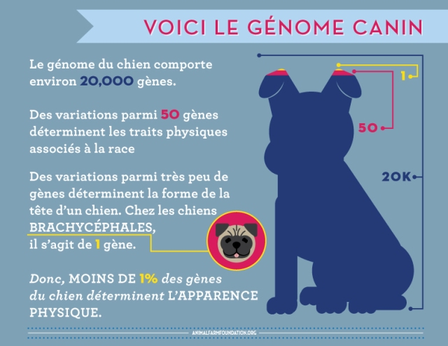AFF_infographic_FRENCH_2