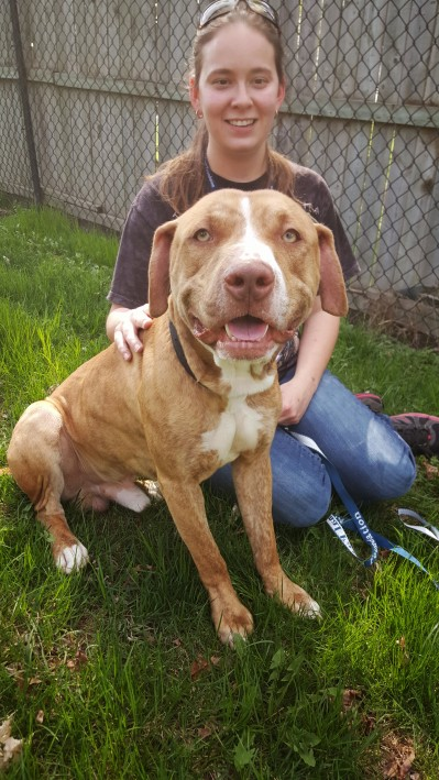 """Each of the 6 dogs pulled from Prince George's County is an individual. Their beahvior and appearance varies. When someone decied to label Leo, seen here, a """"pit bull"""" dog, he became illegal in PG County. He is now at Animal Farm Foudnation in NY."""