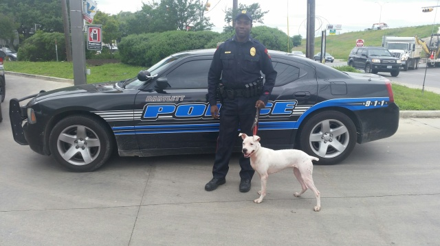 K9 Loll and the Chief  of Barlette Texas PD