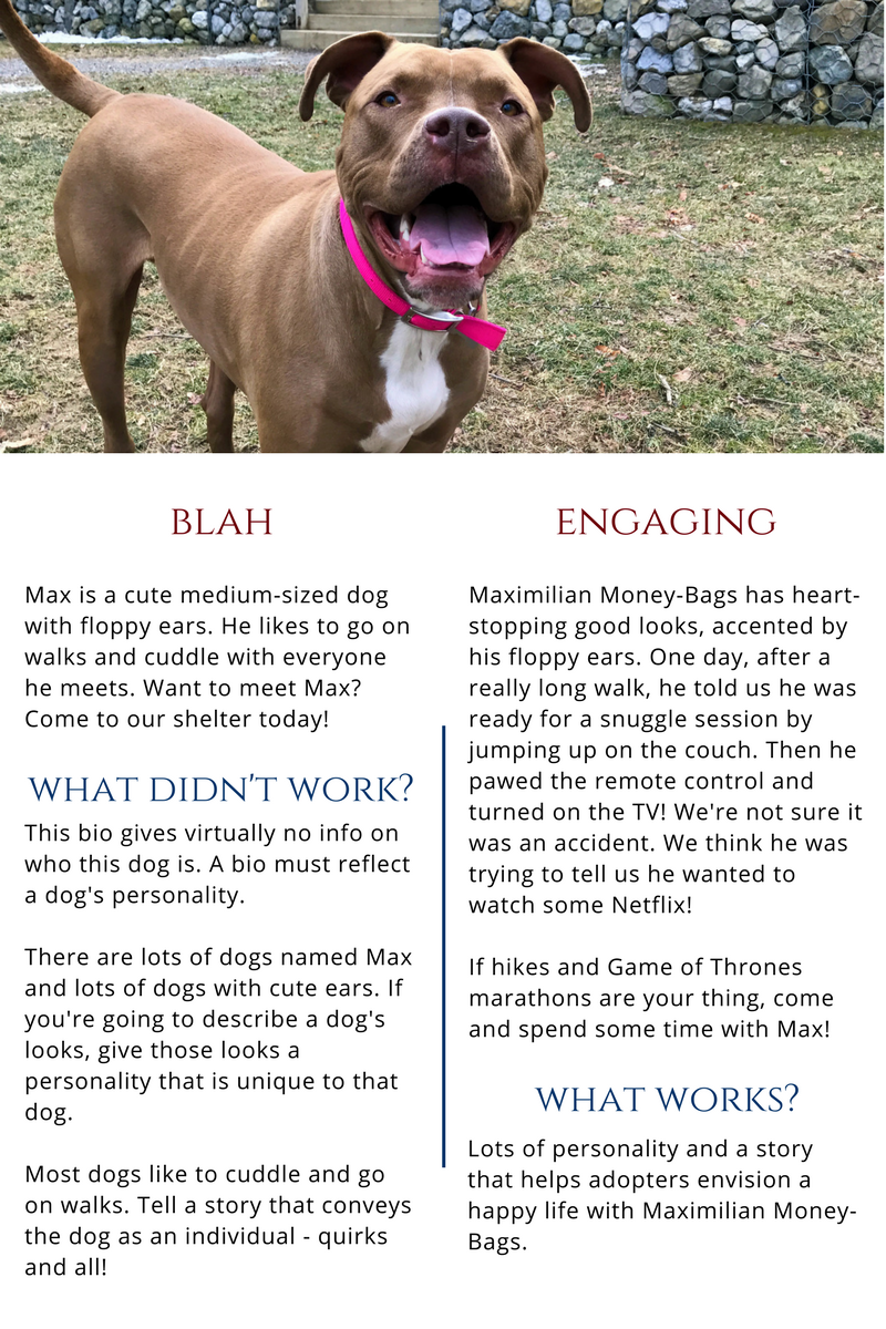 Adoption Bios For Dogs